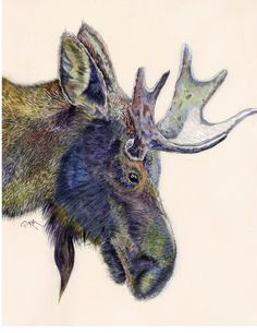 Moose  Original Art Print for your Walls by RicardoMoody on Etsy, $20.00