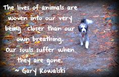 75 Ways to Cope With Pet Loss ~ Are you crushed because of your pet's death? Imagine living in peace and acceptance, without pain or agony. Here's how to cope with losing a pet, make sense of your pet's death and heal the pain you're feeling. Our lost dogs and cats are keeping an eye on us now…just like they did when they were here with us, waiting and hoping for treats! With great love, comes great grief.