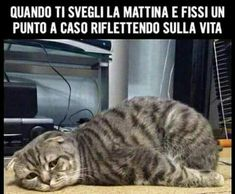 New memes riverdale italiano Ideas Funny Cat Captions, Funny Animal Memes, Funny Cat Pictures, Animal Quotes, Funny Images, Funny Cats, Funny Animals, Funny Jokes, Pet Quotes