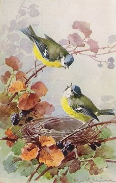 Vintage Postcard Painting by Catherine Klein (born German Artist of Birds, Flowers & Still Life . Vintage Birds, Vintage Flowers, Vintage Art, Watercolor Bird, Watercolor Paintings, Landscape Paintings, Watercolor Portraits, Watercolor Landscape, Abstract Paintings