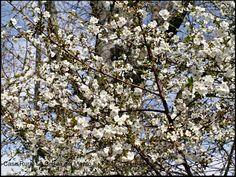 Primavera subiendo a la Peña de las Monjas