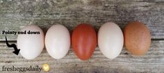 Fresh Eggs Daily®: Why Should Eggs Be Stored Pointy End Down?