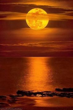 Super-Moon Rising Over Carlin Park Beach, Jupiter, Florida. Visualisation Techniques, Beautiful Sunset, Beautiful World, Beautiful Moon Images, Shoot The Moon, Moon Shadow, Moon Pictures, Moon Pics, Super Moon