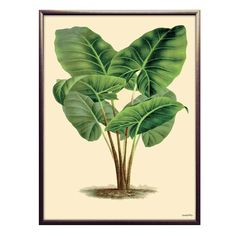 Modern Bohemian, Green Plants, Plant Leaves, Flora, Vibrant, Art Prints, Vanilla, Products, Botany