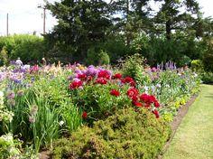Schreiner's Iris Gardens, Brooks, Oregon.