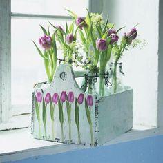 Tulips in box