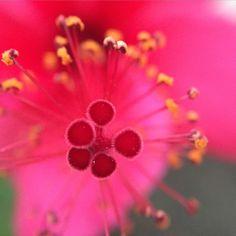 Fuzzy 'round the edges. #macro #olloclip #olloclipmacro #flower #duskmacro #weeklymobilemacro