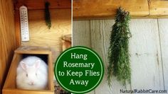 Hang rosemary in your rabbit hutch to ward off flies - NaturalRabbitCare.com. Great idea of the thermometer too!