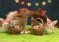 Why wouldn't the hamsters want to be on Bake Off?