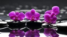 Water flowers stones selective coloring reflections orchids pink (1920x1080, flowers, stones, selective, coloring, reflections, orchids, pink)  via www.allwallpaper.in
