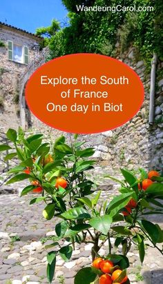 There are so many towns in the South of France to explore. A day trip to Biot, France, makes a perfect excursion. Read more at http://wanderingcarol.com/one-day-in-biot-france/