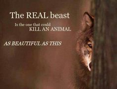 The real beast is the one that could kill an animal as beautiful as this.