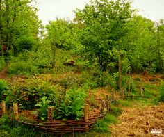 We need #permaculture as #environmental impact of conventional #farming is staggering, and rapidly becoming more apparent. www.mesasostenible.com