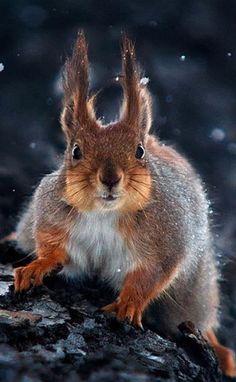 Ecureuil toujours inquiet!