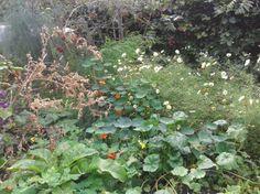 Christine Roelofs - pure smaaksensatie - de tuin