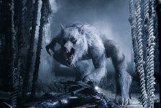 491. Werwölfe