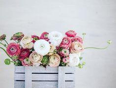 Ravishing RANUNCULUS love this colour mix. #ranuncula #ranunculas #modernrustic #sabinestyle #instawedding #inspiration #creative #flowergram #peach #apricot #blushpink #weddingtrend #wedding #weddingflowers #flowers #floraleye #instaflowers #floraldesign #floralimagery