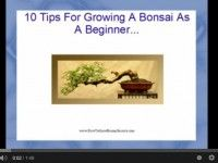 10 tips for beginners on how to grow a bonsai