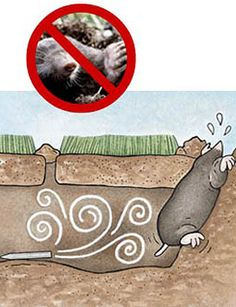 how to get rid of mole hills in your garden