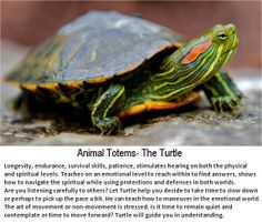 Animal Totems The Turtle  www.facebook.com/paramic
