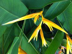 Mauritian flower