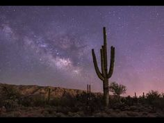 Milky Way and Saguaro Time Lapse