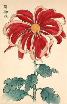 Printed illustration of a chrysanthemum variety 'Nishiki no Mihata' taken from the Japanese publication A Hundred Chrysanthemums by K Hasegawa. Creator Hasegawa, Keikwa (Author) Date 1891 Vintage Botanical Prints, Botanical Drawings, Botanical Art, Japanese Chrysanthemum, Japanese Flowers, Japanese Art Modern, Japanese Prints, Illustration Botanique, Plant Illustration