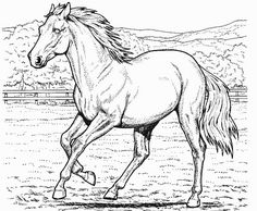 130 Best Horses Coloring Pages Images Coloring Books Coloring
