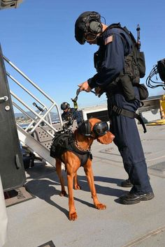 Vizsla officer