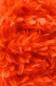 Delicate and fluffy feathers Orange