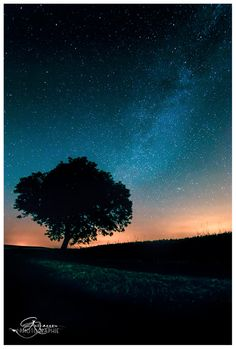 Milky Tree by gael photo.com on 500px