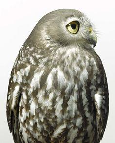BIRD Gary Heery Book-completemmockup-11.jpg