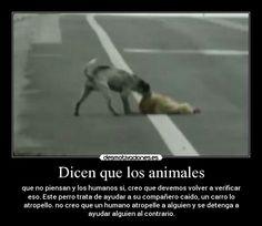 Sera berdad que los animales son mas inteligente que los humanos ? Lean la imagen