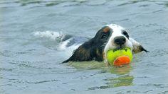 Dog Training Grounds |