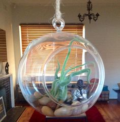 Glass terrarium with Buddha air plant and stones by InTheSpareRoom
