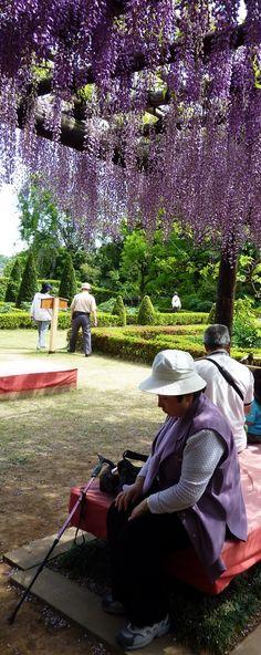 My dream wisteria garden shade