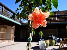 Turquoise Butterfly Blog: Spring Brings out New Things in Santa Fe