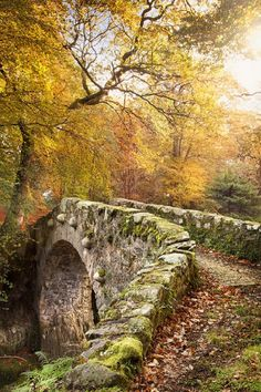 Tollymore, Northern Ireland