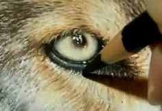 """Painting a Day Demonstration - Wolf Eyes by Roberta """"Roby"""" Baer - Video Lessons of Drawing & Painting"""