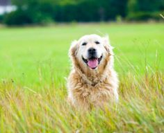 3 Natural Remedies for Dogs: Coconut Oil, Canned Pumpkin, Diatomaceous Earth - The Dogington Post Coconut Oil Dogs Skin, Pets 3, Dog Teeth, Diy Stuffed Animals, Doge, Dog Care, Dog Owners, Dog Friends, Canned Pumpkin