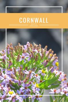 Cornwall is famous because of his beautiful nature and tropical climate. That's seriously true, because Cornwall looked beautiful. For sure a recommendation to go to, but what can you see here? Today you can read my recommendations and also my what I don't recommend.