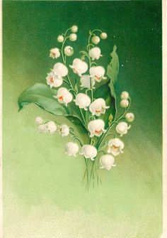 Botanical Flowers, Botanical Illustration, Botanical Prints, Watercolor Illustration, Watercolor Art, Realistic Flower Drawing, Maurice Careme, Green Wedding Decorations, Lily Of The Valley Flowers