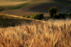 7 zile în Toscana – mai mult decât simplă o călătorie – The True Treasures Toscana, Mai, Fields, Travel Photography, Italy, Green, Outdoor, Instagram, Outdoors