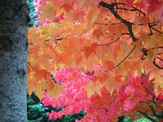 Fall colours in BC. British Columbia, Colours, Fall, Photography, Painting, Autumn, Painting Art, Paintings, Paint