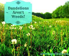 Our Heritage of Health: Dandelions Aren't Weeds!