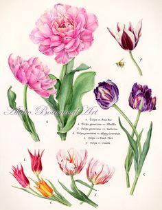 tulip-2015  ⇒http://botanical.sakura.ne.jp/Gallery.html