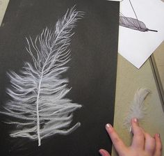 These drawings were done by children aged They used white chalk and charcoal on black paper and used a real feather for observation enlarging the drawings to fill the paper. They were using the smudging qualities of the chalk to recreate the texture of Art Blanc, Feather Drawing, Drawings Of Feather, Classe D'art, 5th Grade Art, Chalk Drawings, Drawings On Black Paper, Drawing Projects, School Art Projects