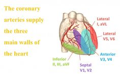 Coronary Circulation and the 12 Lead EKG