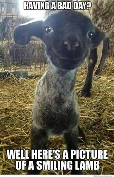 Funny pictures about Having a bad day? Here is a smiling lamb. Oh, and cool pics about Having a bad day? Here is a smiling lamb. Also, Having a bad day? Here is a smiling lamb. So Cute Baby, Lil Baby, Funny Animal Quotes, Animal Memes, Animal Humor, Funny Animal Pics, Humorous Quotes, Happy Animals, Cute Baby Animals
