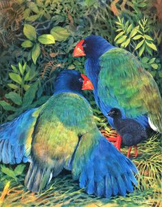 Takahē (Porphyrio hochstetteri) is a flightless bird indigenous to New Zealand and belonging to the rail family. Rare Birds, Exotic Birds, Colorful Birds, Pretty Birds, Beautiful Birds, New Zealand Art, Nz Art, Flightless Bird, Funny Birds